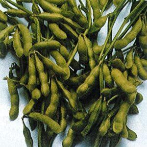 ふれあい市場収穫祭(大山振興会) @ ふれあい市場販売所